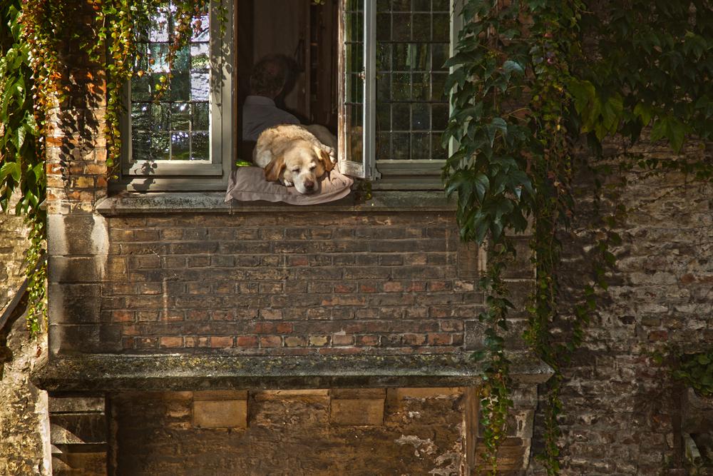 Der wohl am meist fotografierte Hund in Belgien.....