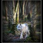 Der Wolf...