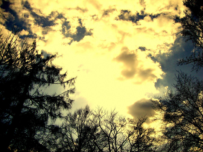 Der Wunsch der Wurzel den Himmel zu berühren...