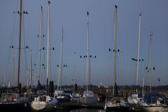 Der Yachthafen ist fest in der Hand der Krähen