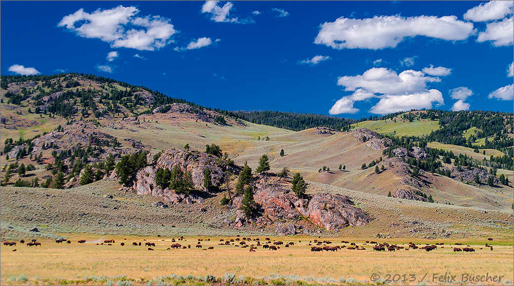 Der Yellowstone-Nationalpark hat Geburtstag!