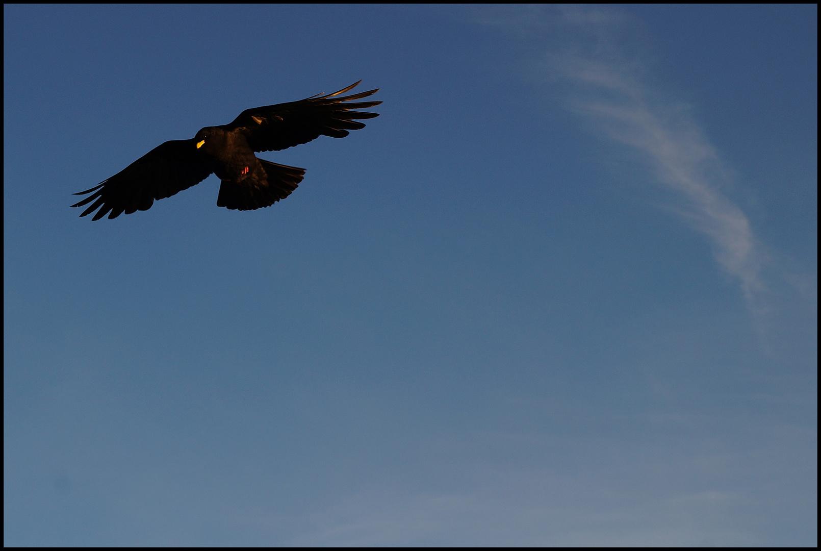 Der zahme Vogel singt von Freiheit doch der wilde Vogel fliegt