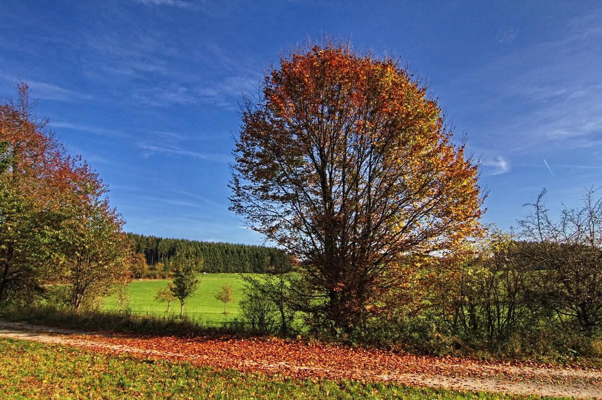 Der Zauber des Herbstes