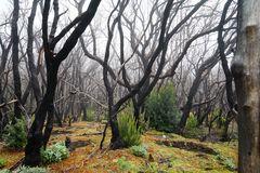Der Zauberwald erholt sich langsam - aber es wird noch viele Jahre dauern ...