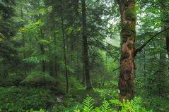 Der Zauberwald - la forêt ravissante