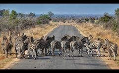 Der Zebrastreifen...