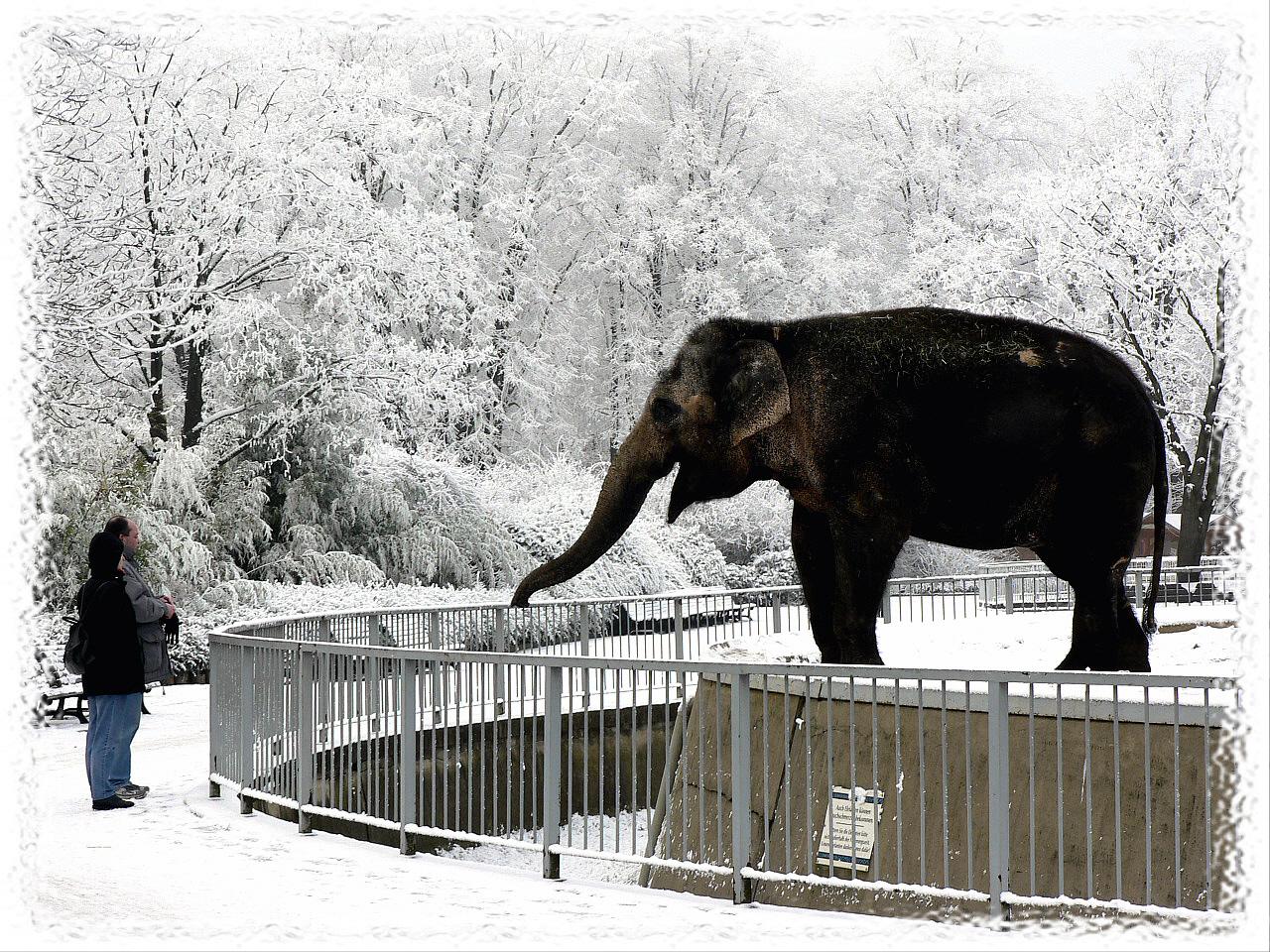 Der Zoo, ein Wintermärchen!