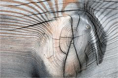 Der/das gefiederte Zebrafant