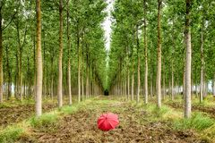 Dérouler le tapis vert