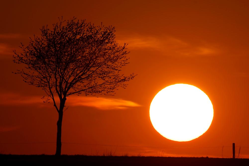 Derselbe Baum, anderes Licht...