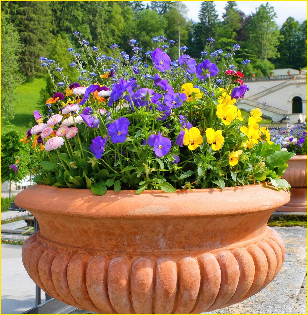 Des fleurs de Linderhof ...
