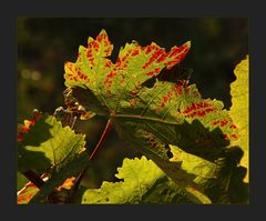 Des Herbstes Röte