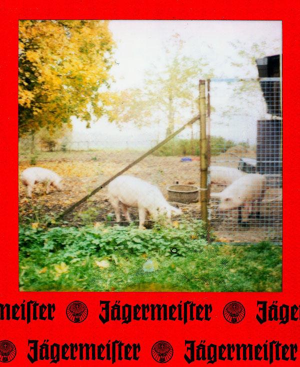Des Jägermeisters Schweinehof