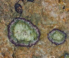 Des lichens, une oeuvre d'art! - Flechtenfantasie!