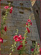 Des murs à Larressingle…