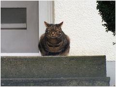 Des Pfarrers Katze ...