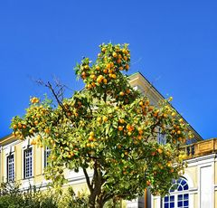 des sommers frucht