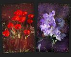 Des Tulipes et des Iris