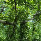 Des vertes et des pas mûres…