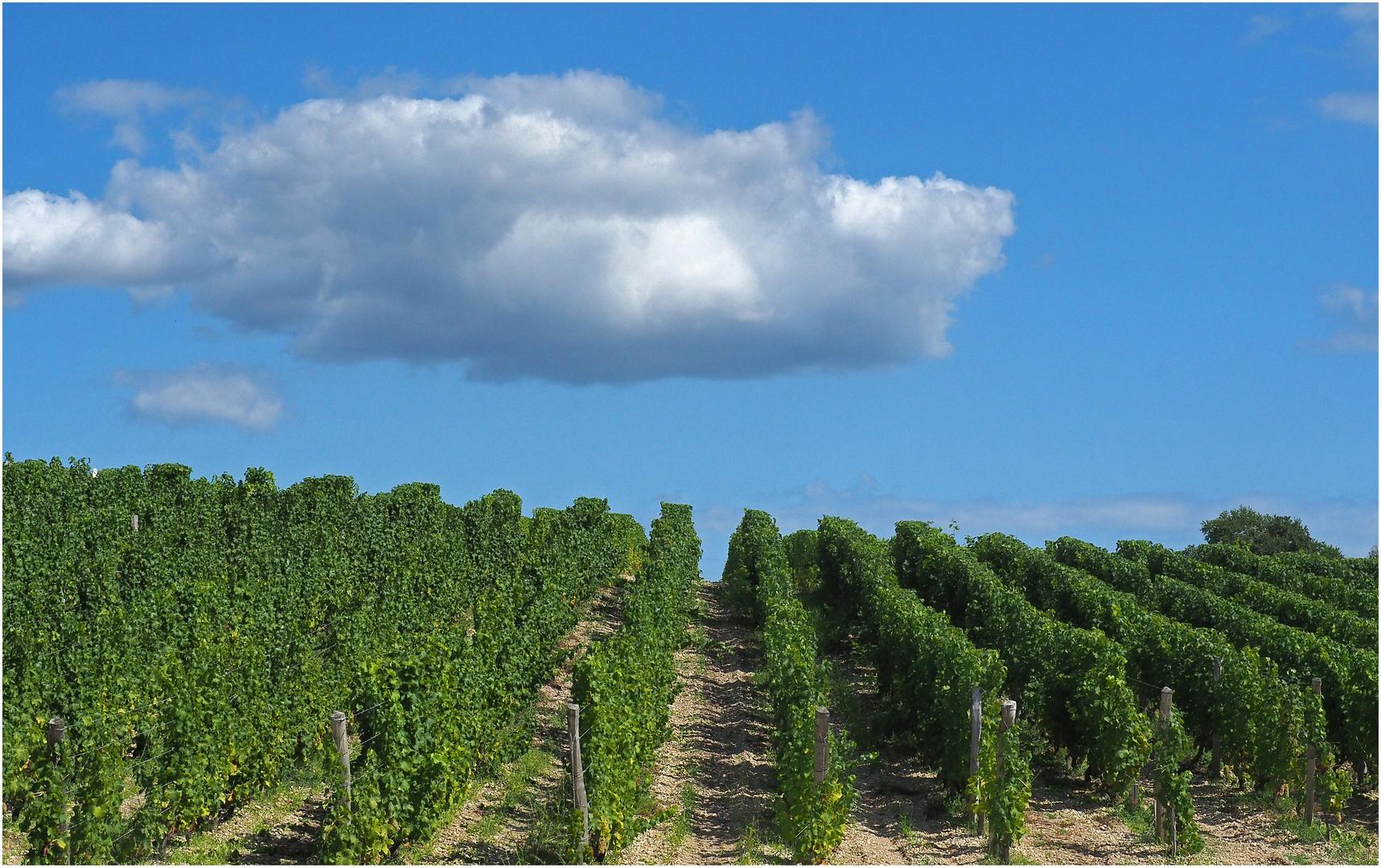 Des vignes prometteuses