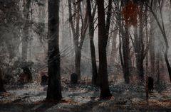 Des Waldes Ruh´