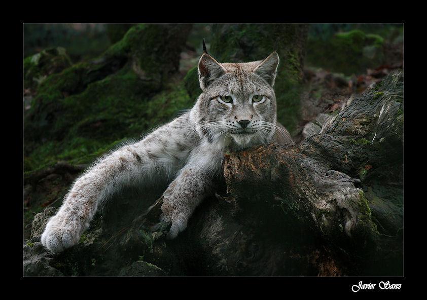 Descansando en el bosque.