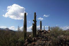 Desert Beauties - Wüstenschönheiten II