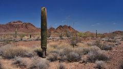 desert fascination