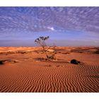 Desert Impression in Mauritania