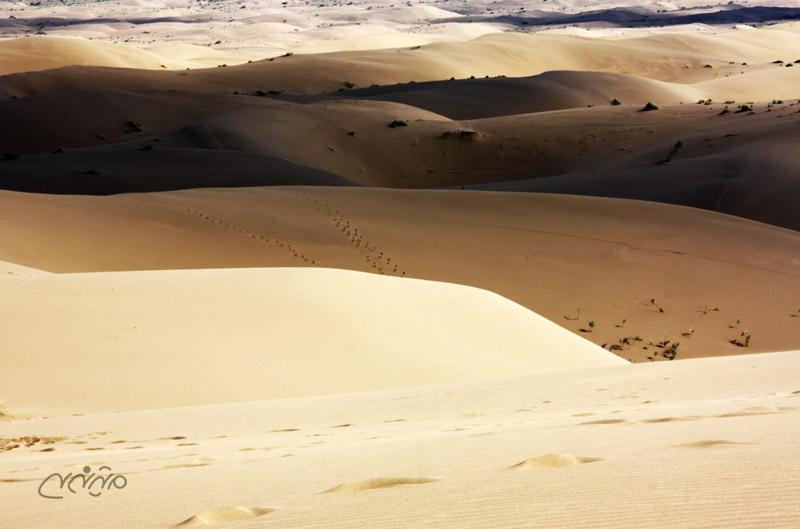 desert of marenjab in Iran