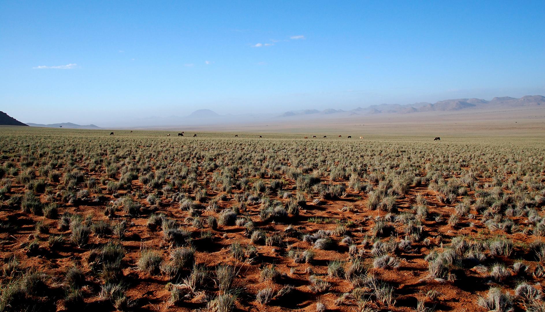 Desert Storm in Klein Aus