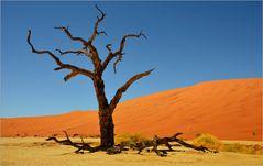 desert trees...