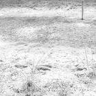 Desertforming