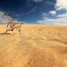 desertichevisioni