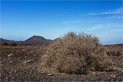 Desertland...