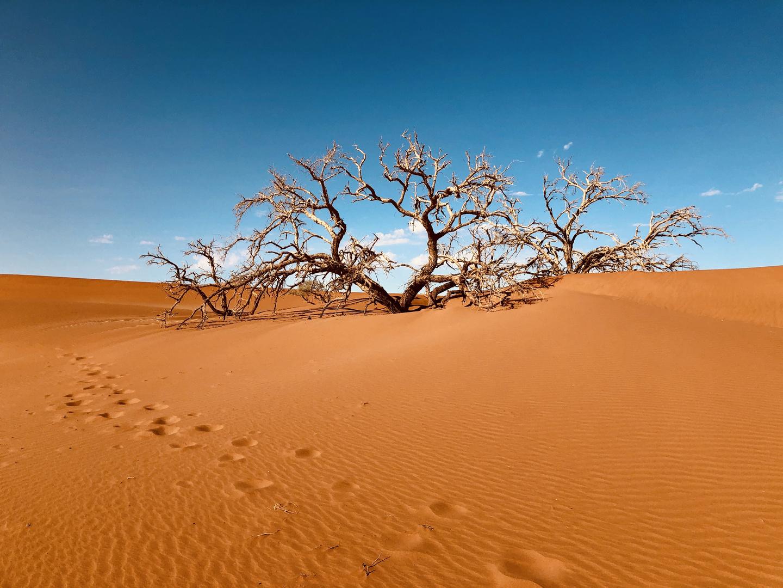 Deserto Kalahari