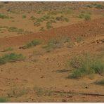 Desierto Thar -Jaisalmer_India