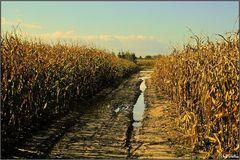 """ Desolate Fields """