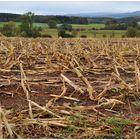 Despues de la cosecha del maíz (nach der Maisernte)