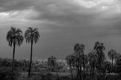 Después del temporal