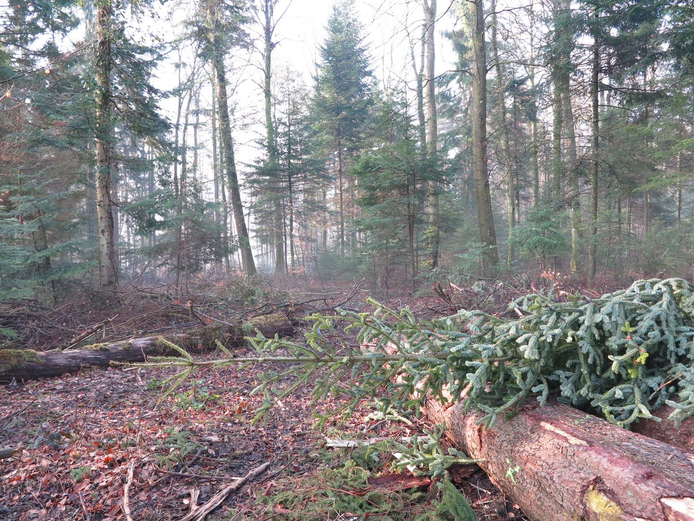 Destrucción del bosque