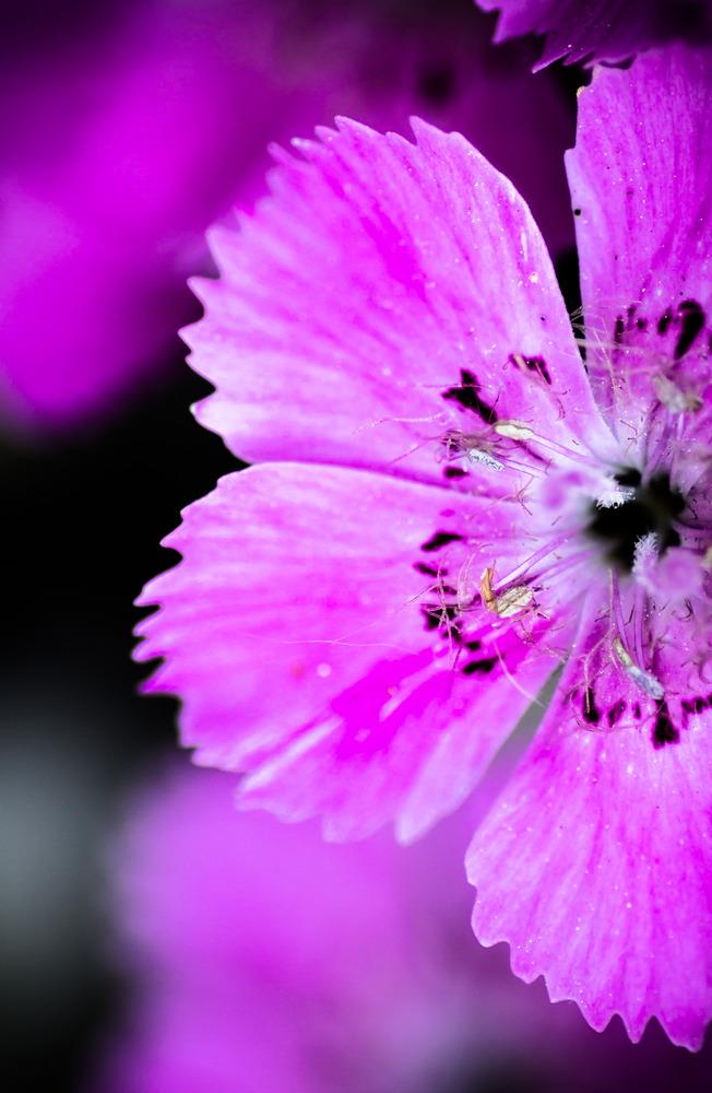 Detail der Blüte