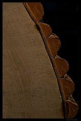 Detail einer Baumscheibe