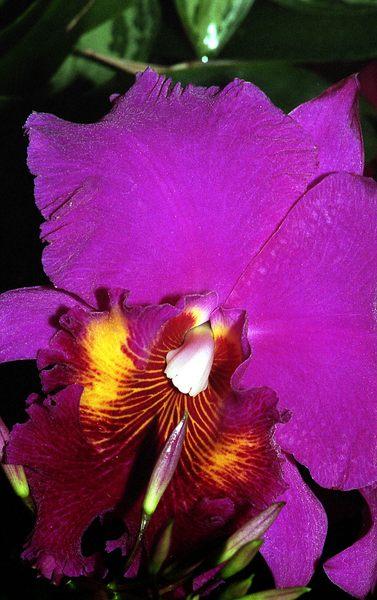 Detail einer Orchidee