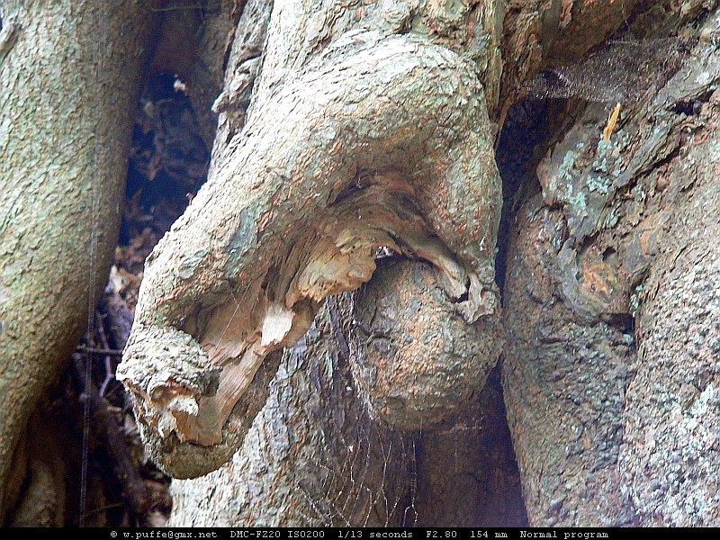Detail eines Baumes