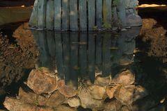 Detail Insel Stein gespiegelt