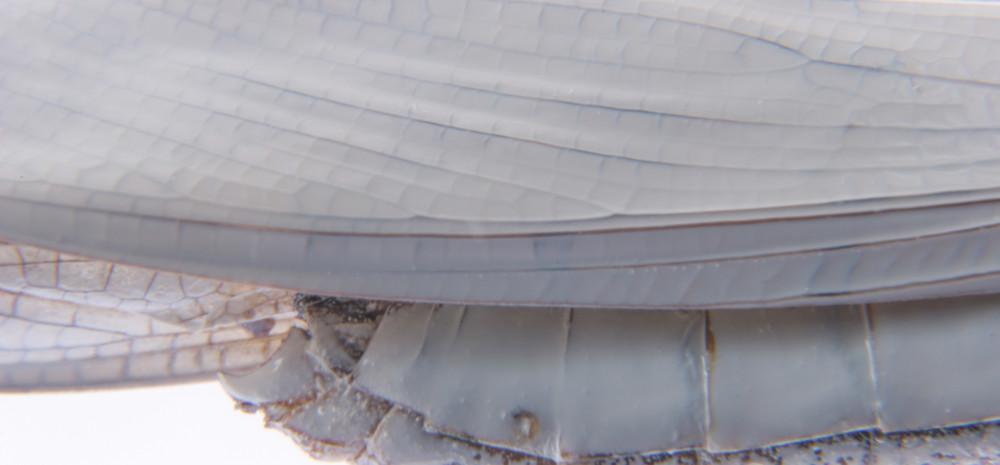 Detail IV