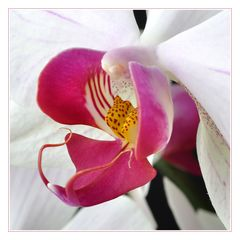 Detail meiner Lieblingsorchidee