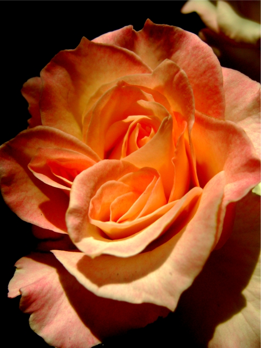 detail of bloom