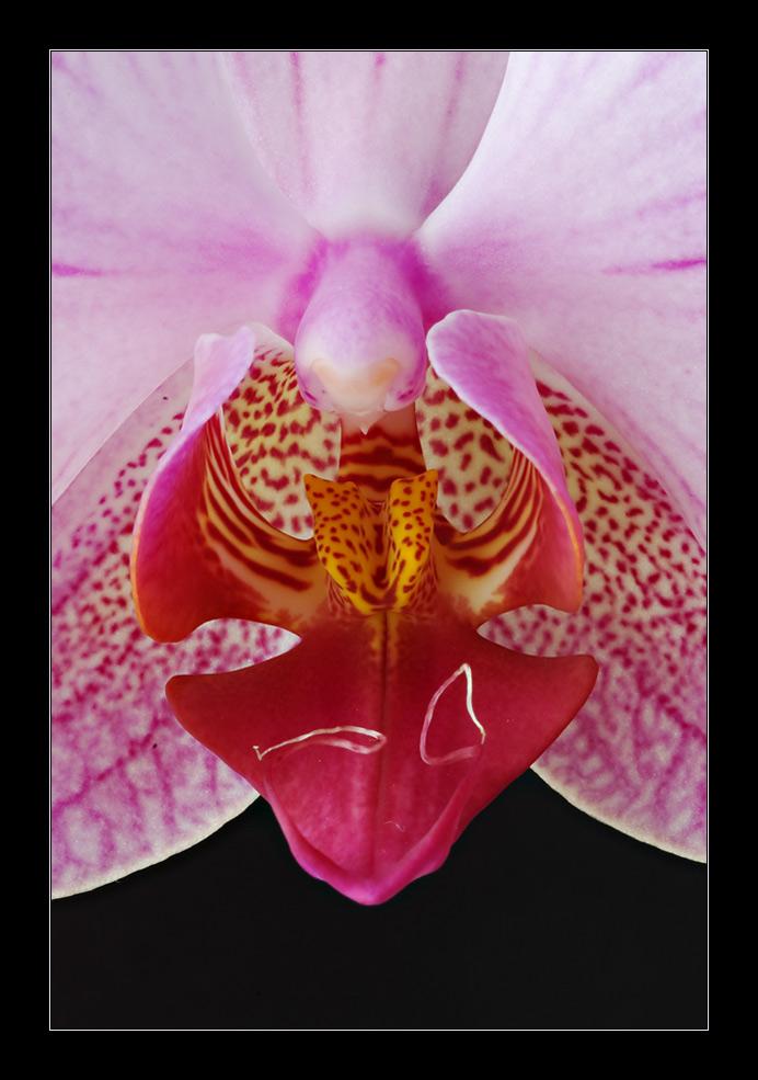 Detail - Orchideen